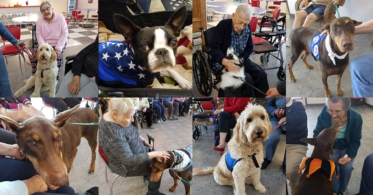Fieldstone Therapy Dogs